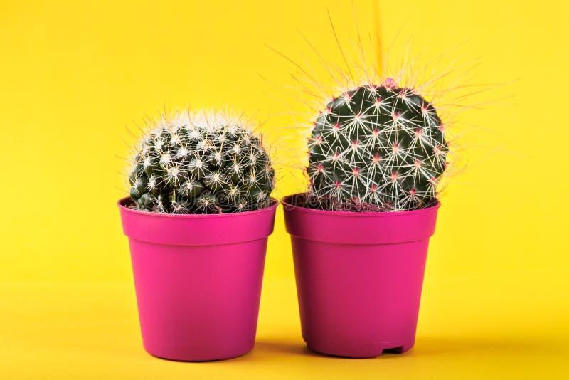 Malutki kaktus w garnku na Jaskrawym Neonowym tle Naszły Imago fotografia stock