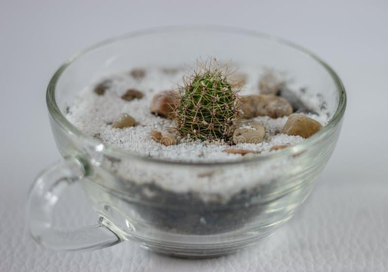 Malutki kaktus w szklanym garnku fotografia royalty free
