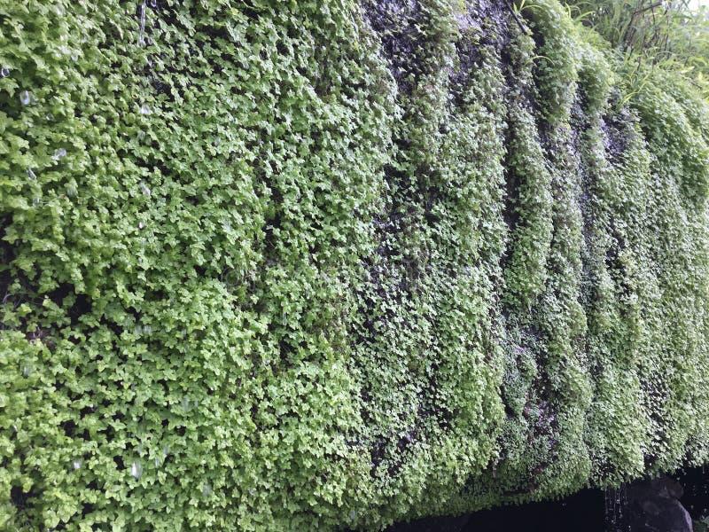 Malutki zielony życie na skałach fotografia royalty free