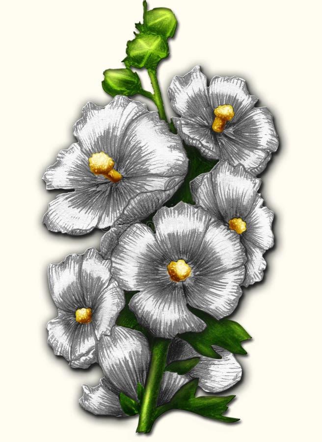 Malva blanca libre illustration