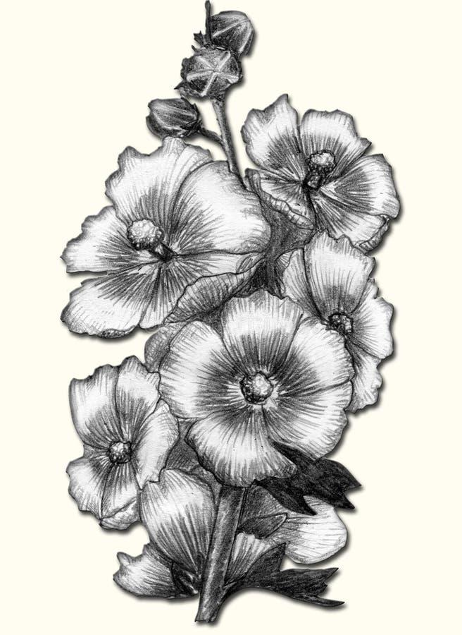 Malva - bosquejo aislado ilustración del vector