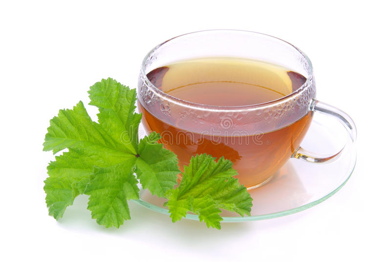Malva de thé photo stock
