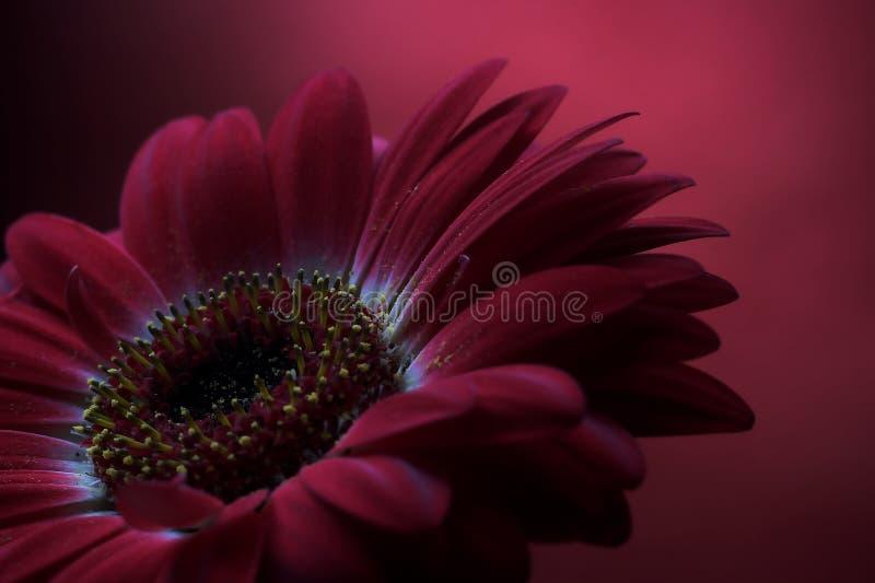 Malvenfarbener Blumen-Aufbau 2. lizenzfreie stockfotografie