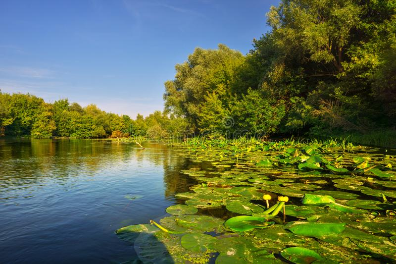 Maly Dunaj-rivier met geel water lilly royalty-vrije stock foto