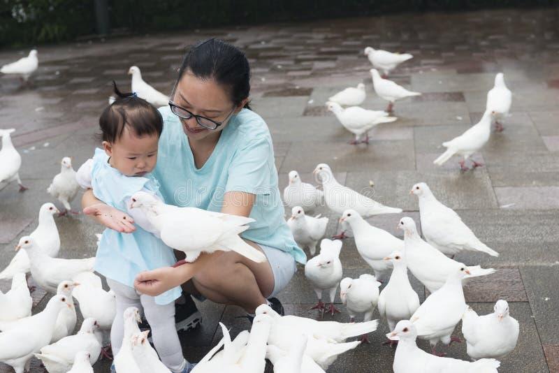 Mamá china animar pocas palomas de la alimentación de la hija imagen de archivo