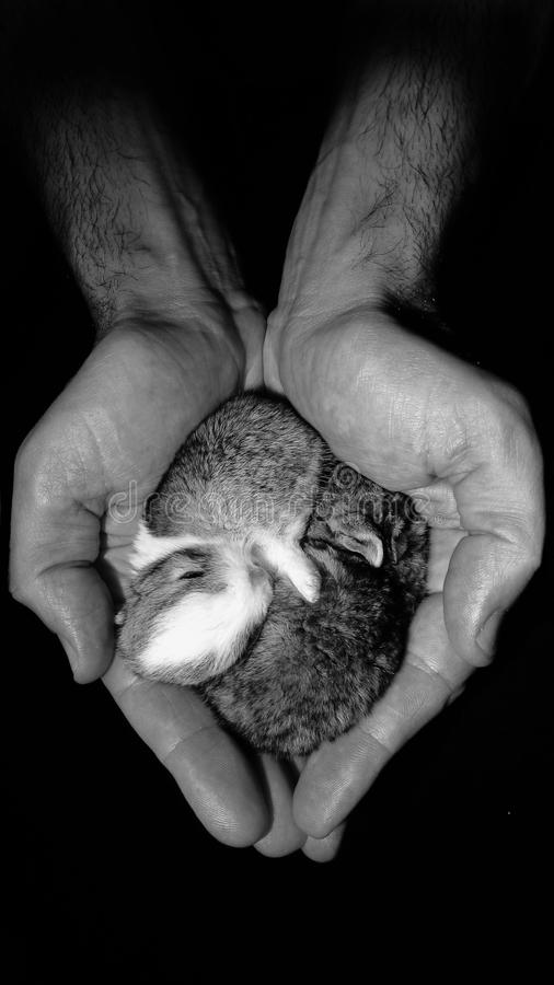 Mamá del corazón del conejo fotos de archivo