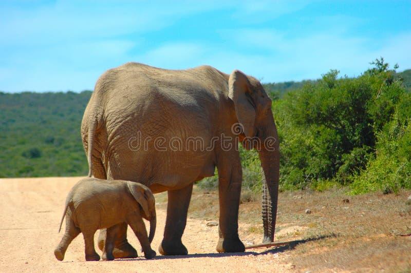 Mamã do elefante imagem de stock royalty free