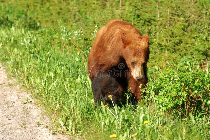 Mamã e filhote do urso fotografia de stock royalty free