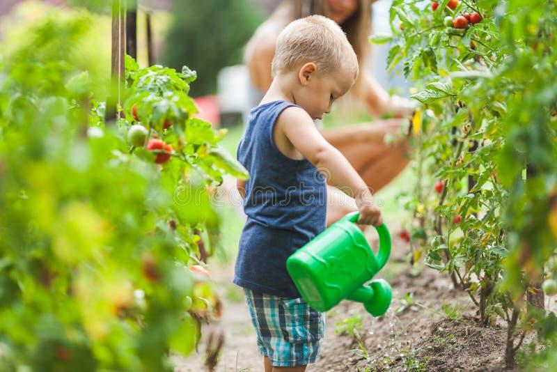 Mamã helphing da criança bonito no jardim imagens de stock