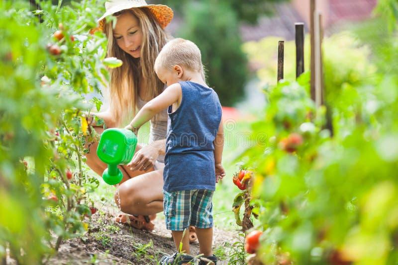 Mamã helphing da criança bonito no jardim imagem de stock royalty free