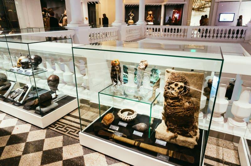 Mamã na vitrina, museu da história natural, Romênia fotografia de stock royalty free