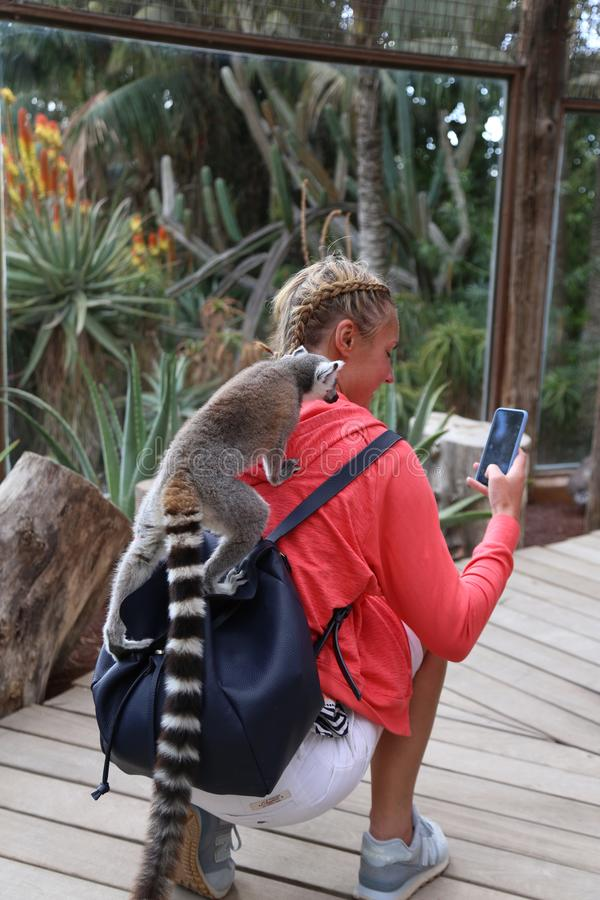 Mamífero animal engraçado pequeno África do lêmure com povos foto de stock royalty free