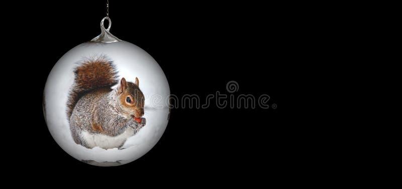 Mamífero, ardilla, ornamento de la Navidad, roedor
