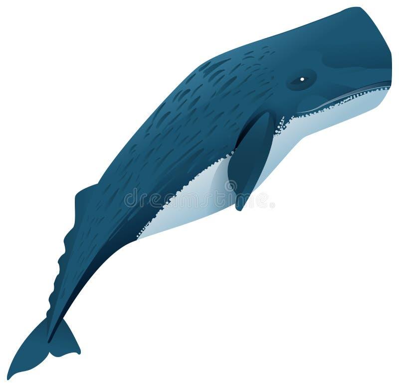 Mamífero marinho de baleia de esperma ilustração royalty free