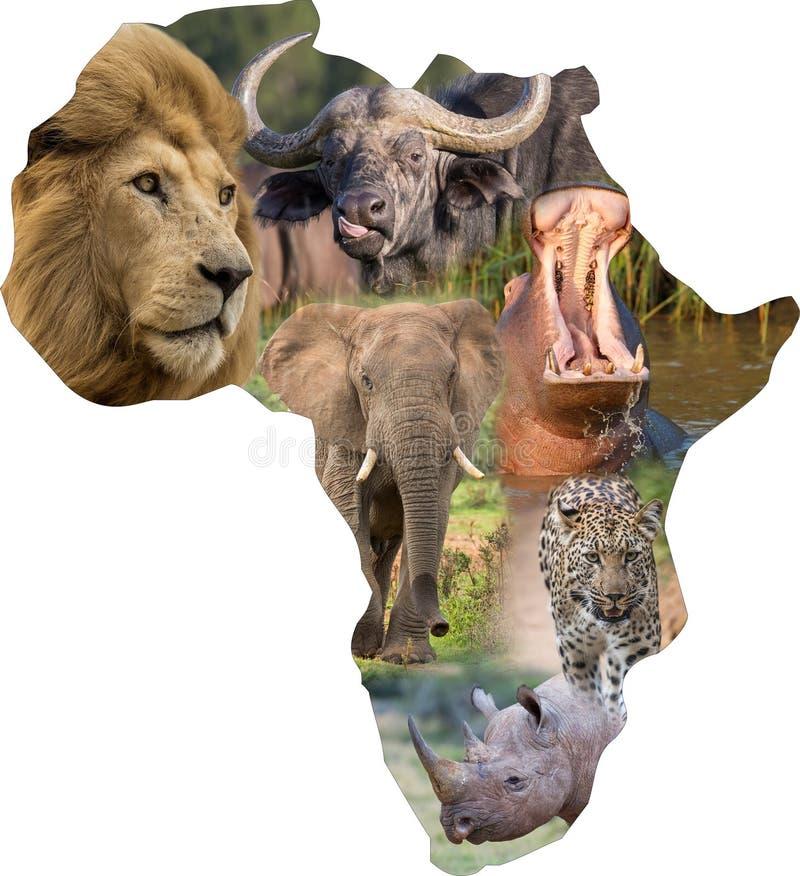 Mamíferos selvagens africanos em uma colagem de África imagens de stock