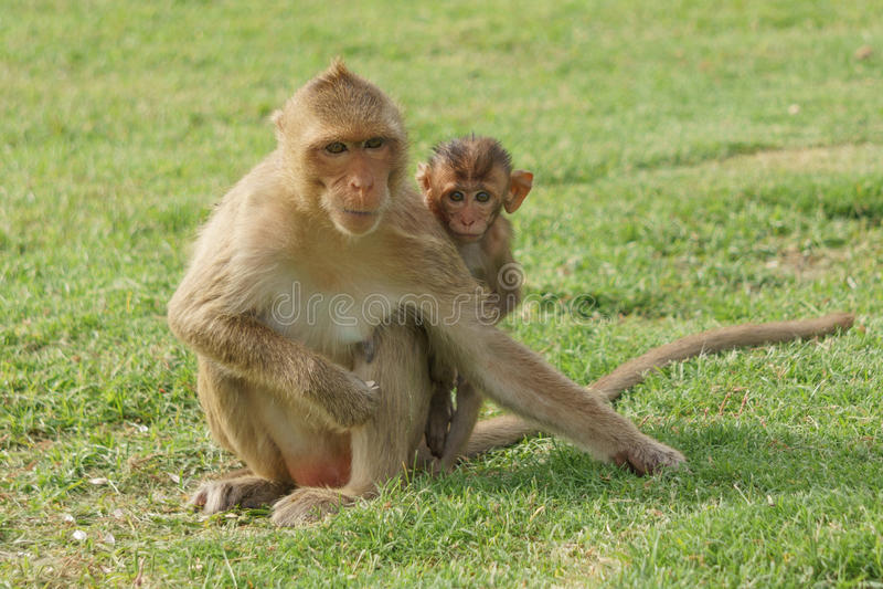 Mama i dziecka małpa obraz stock