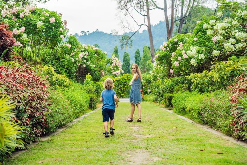 Mama i syn biegamy wokoło w kwitnącym ogródzie Szczęśliwy życie rodzinne stylu pojęcie obrazy royalty free