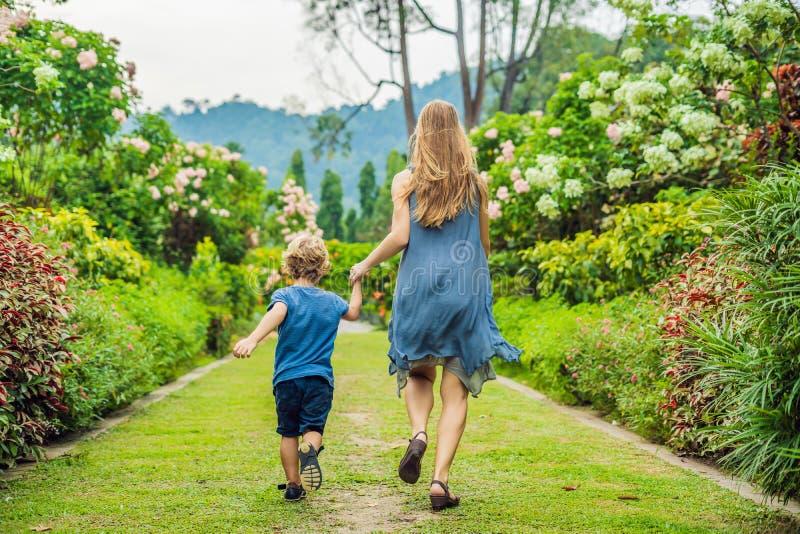 Mama i syn biegamy wokoło w kwitnącym ogródzie Szczęśliwy życie rodzinne stylu pojęcie fotografia stock