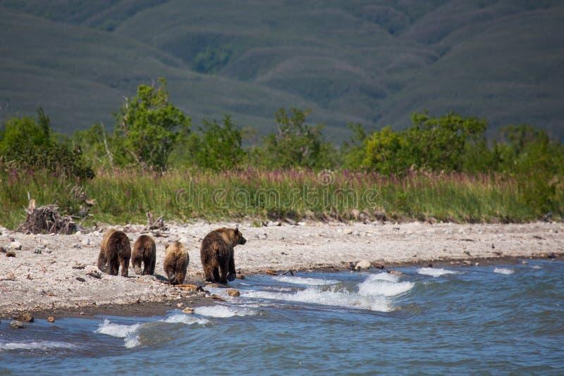 Mama niedźwiedź i jej lisiątka - wielka rodzina obrazy royalty free