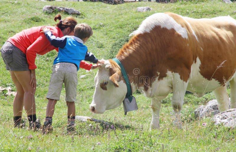 Maman et fils caressant une vache pendant des vacances de montagne d'été images stock