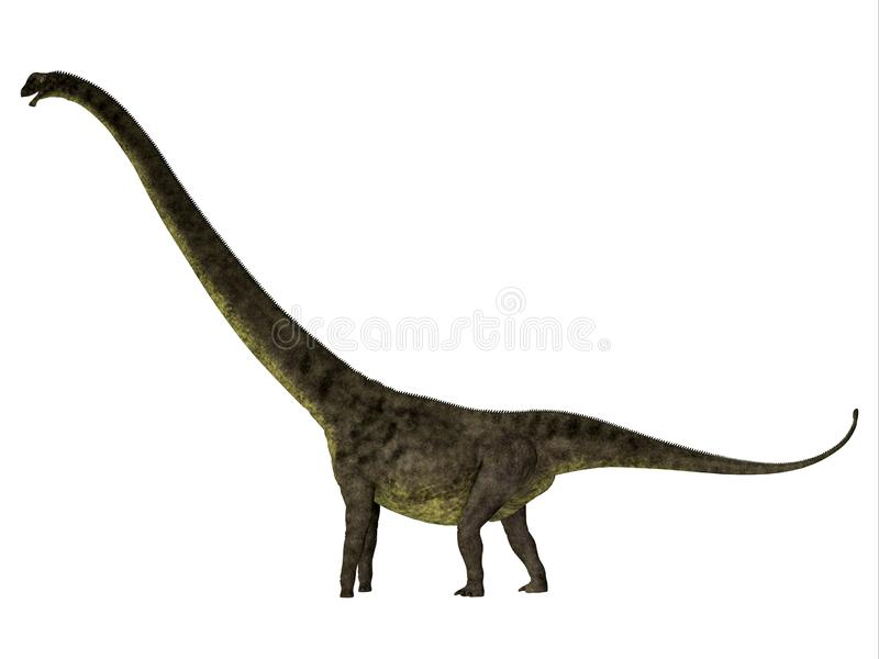 Mamenchisaurus youngi dinosaura strony profil ilustracji