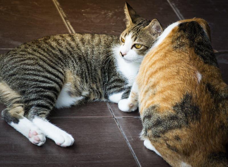 Mamma del gatto che prende cura di un gattino nella casa di amore fotografia stock libera da diritti