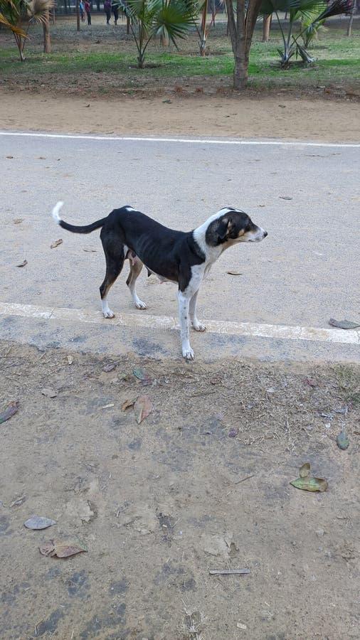 Mamma Doggy alla ricerca dei suoi figli fotografie stock libere da diritti