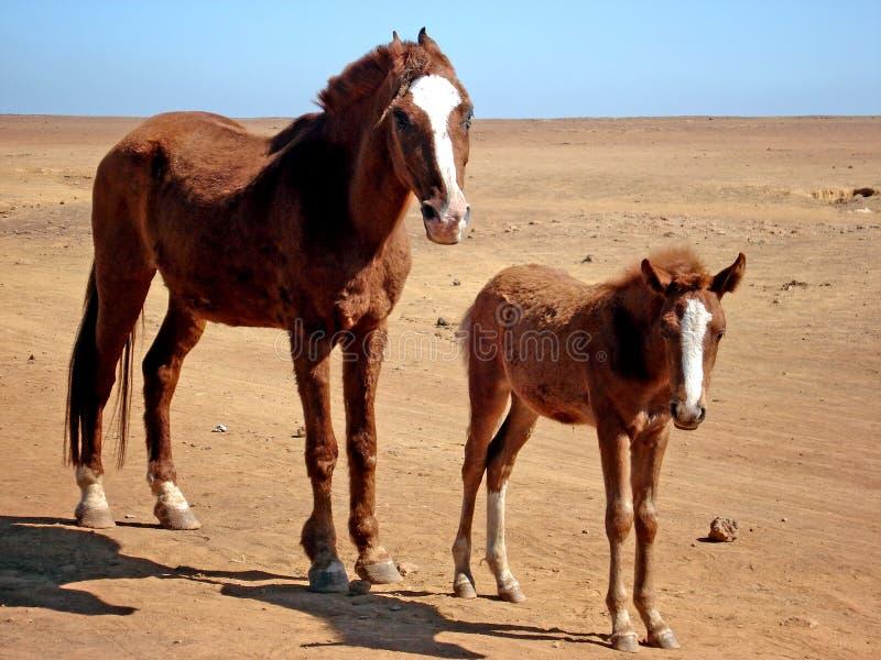 Mamma e bambino fotografie stock