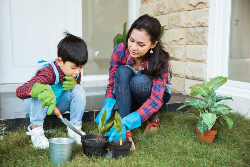 Mamma e figlio che piantano nuova pianta Attività di giardinaggio fotografia stock libera da diritti