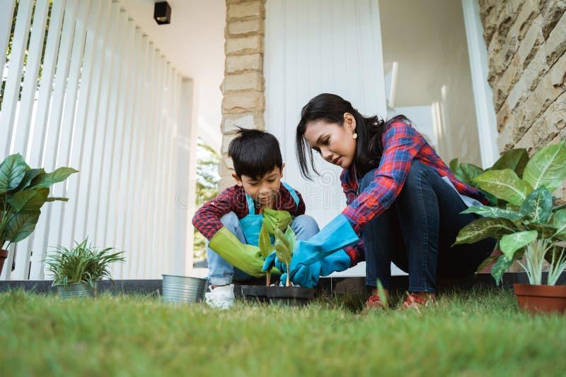 Mamma e figlio che piantano nuova pianta Attività di giardinaggio fotografia stock