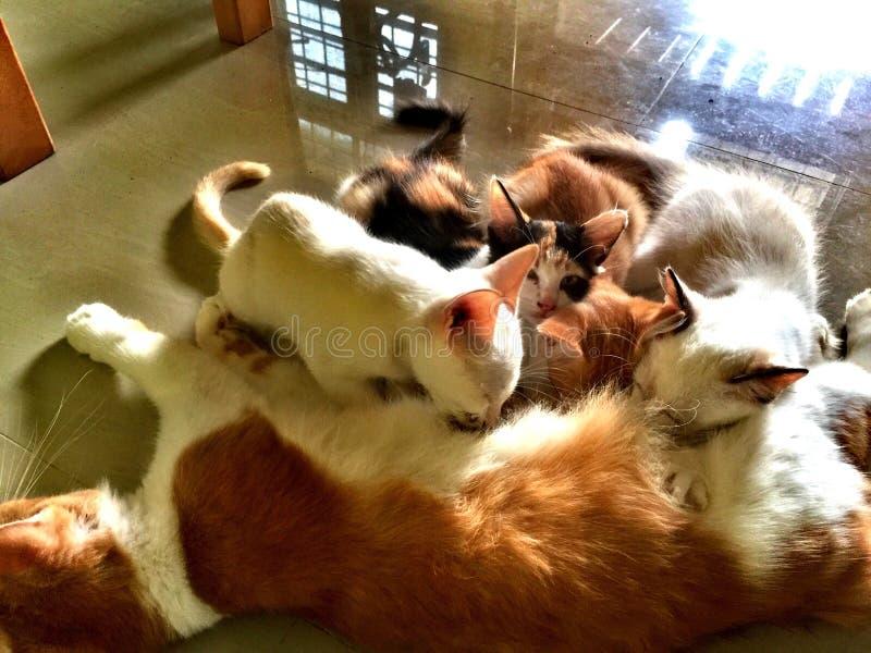 Mamma e gattino immagine stock
