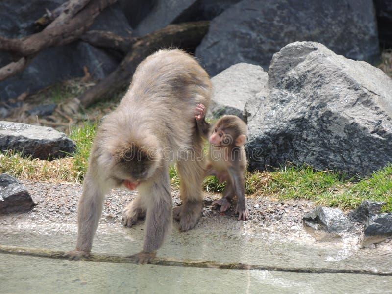 Mamma en babyaap royalty-vrije stock foto