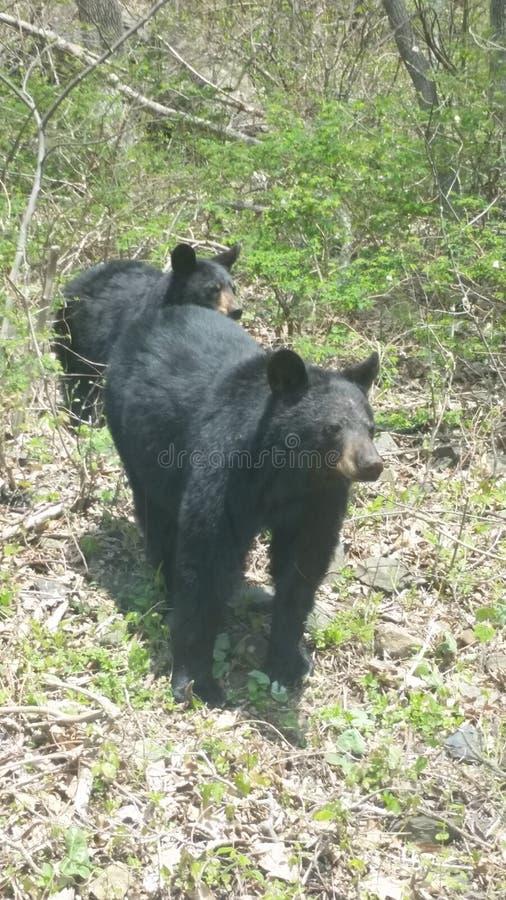 Mammabjörnen och behandla som ett barn björnen royaltyfria foton