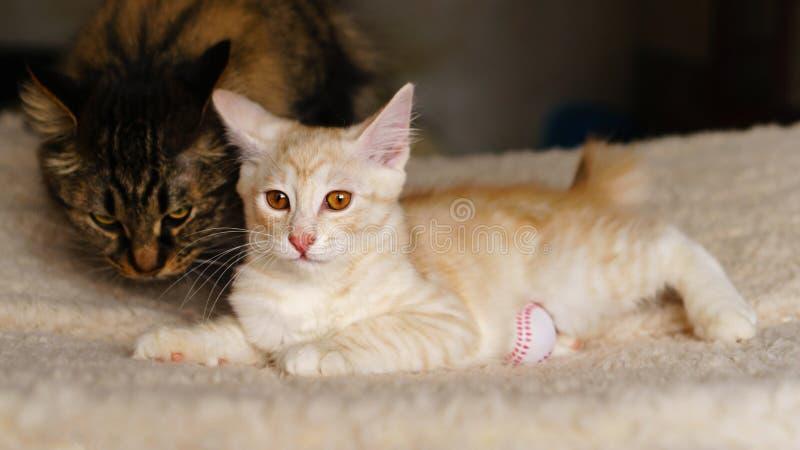 Mammakatt och kattunge royaltyfria foton