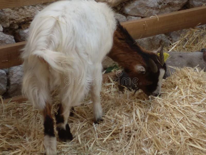 mammal стоковое изображение