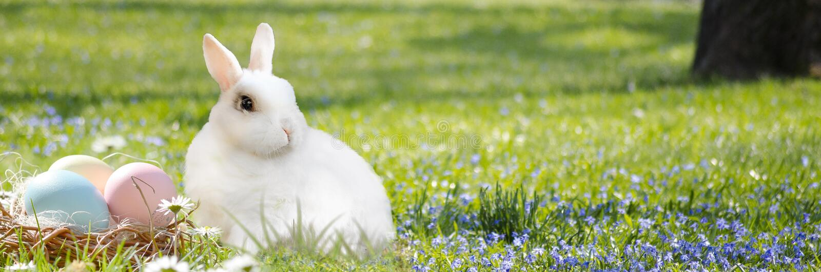 Mammal, Grass, Rabbit, Rabits And Hares stock photography