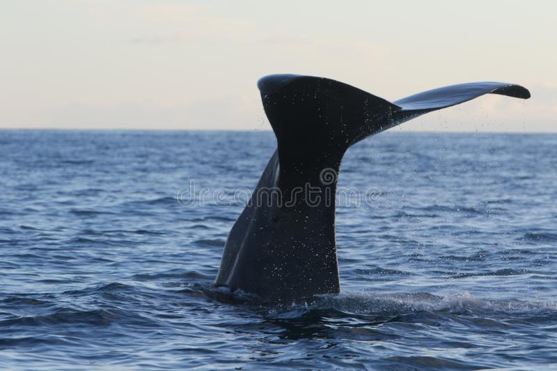 Mammal, Marine Mammal, Whales Dolphins And Porpoises, Whale stock photos