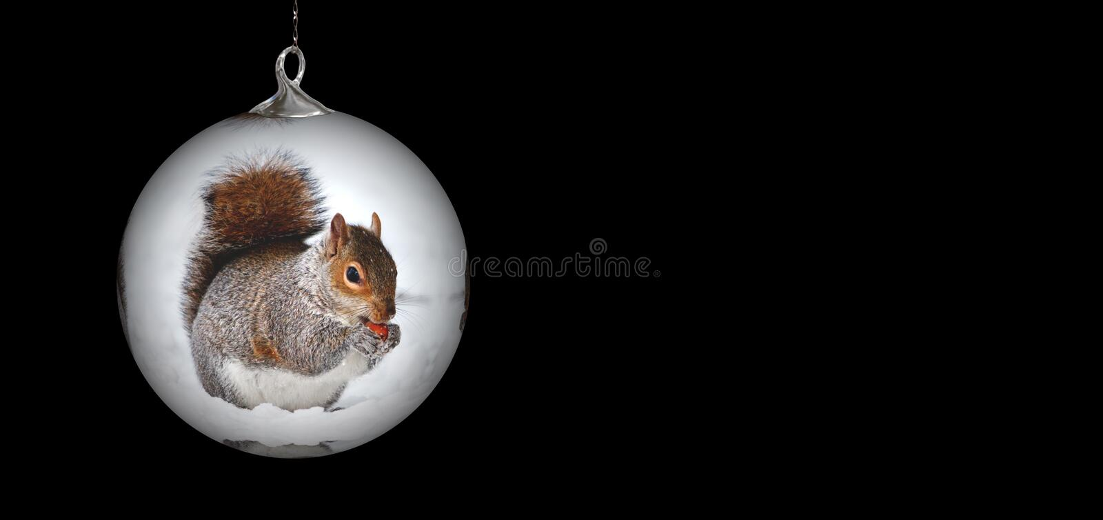 Mammal, Squirrel, Christmas Ornament, Rodent