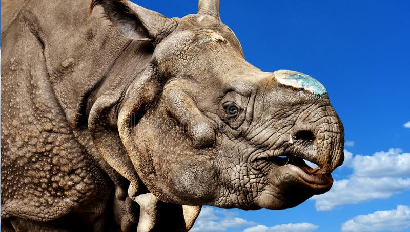 Mammal, Wildlife, Fauna, Terrestrial Animal Free Public Domain Cc0 Image