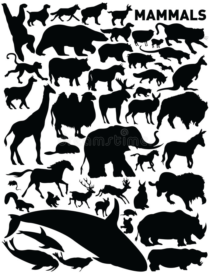Download Mammals stock vector. Illustration of farm, clip, dolphin - 6230121