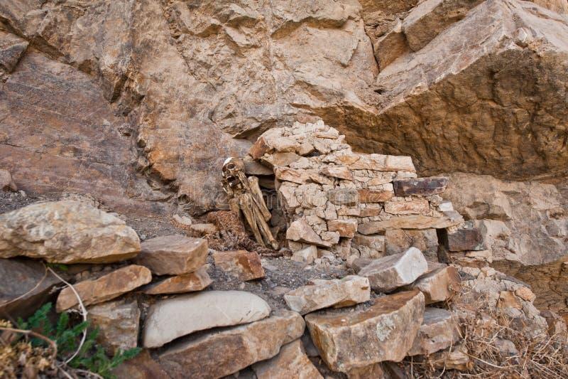 Mamman av Paraqra i Peru royaltyfri fotografi