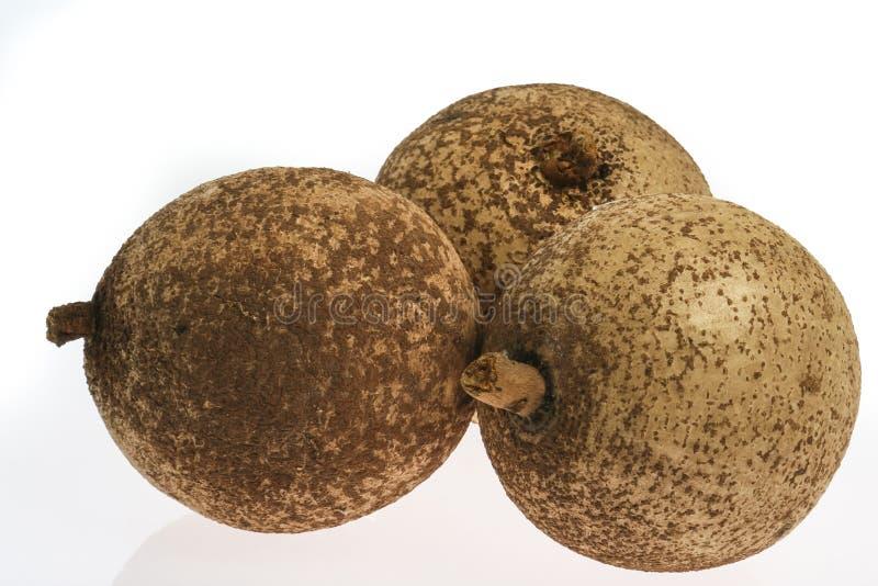 Mammee jabłko (Mammea americana) zdjęcie stock