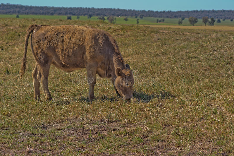 mammifère photo libre de droits