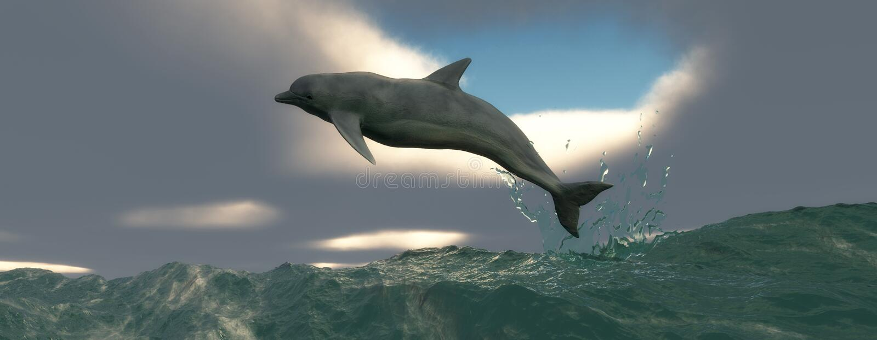Mammifère marin image libre de droits