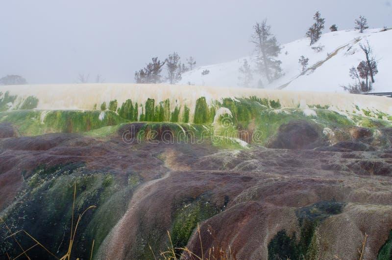 Mammoet hete de lentesterrassen in de wintertijd bij het Nationale Park van Yellowstone - mooi stomend kleurrijk travertijnkalkst stock afbeelding
