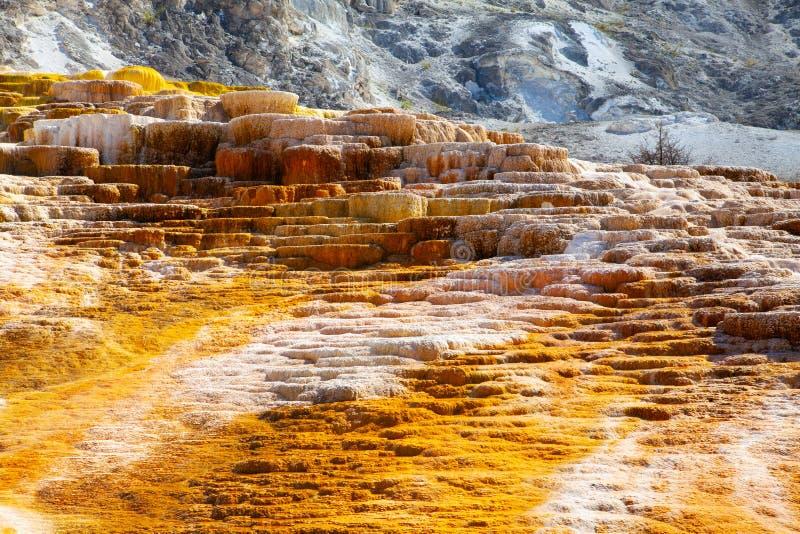 Mammoet Hete de Lentesterrassen, Wyoming, de V.S. stock foto's