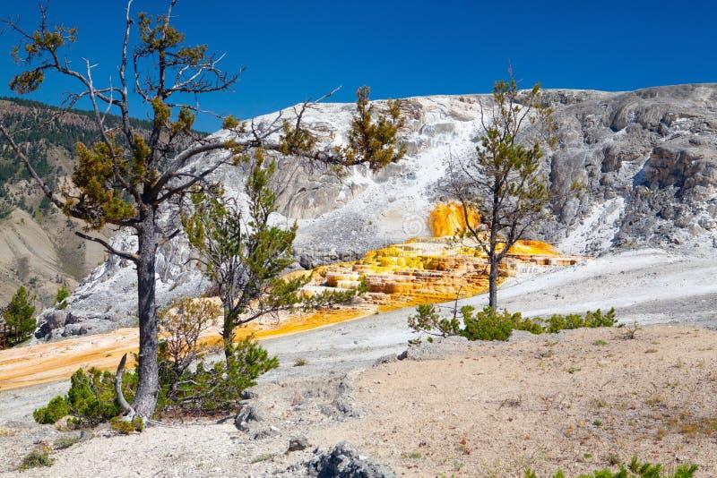 Mammoet Hete de Lentesterrassen, Wyoming, de V.S. royalty-vrije stock foto's