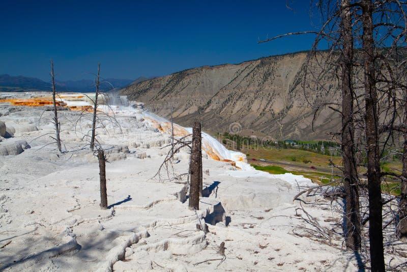 Mammoet Hete de Lentesterrassen, Wyoming, de V.S. royalty-vrije stock afbeelding
