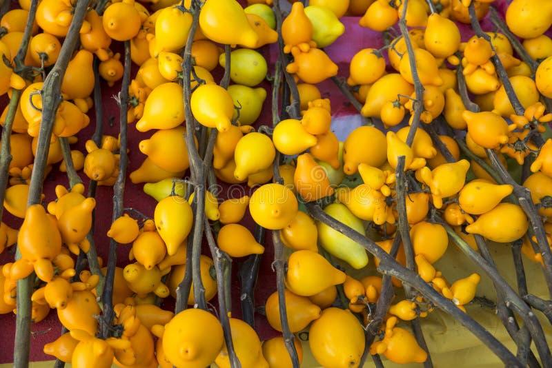 Mammosum de la solanácea Fondo amarillo imagenes de archivo