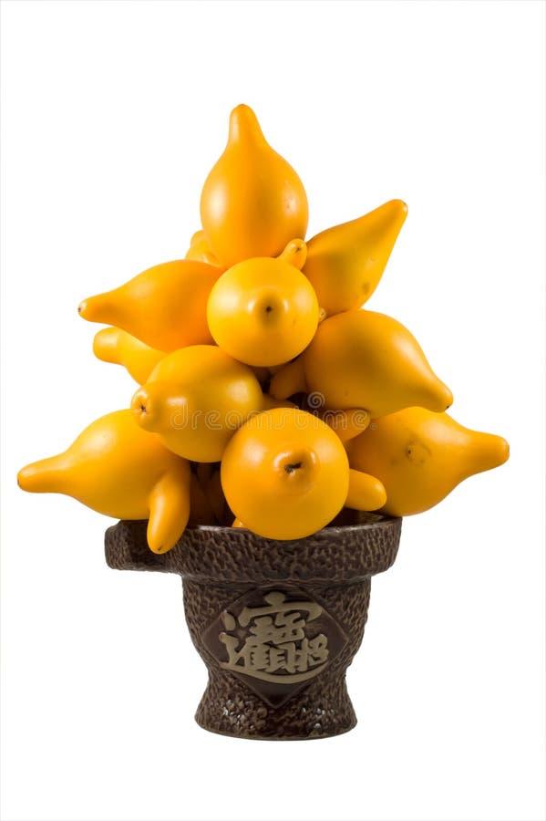 Mammosum do Solanum fotos de stock